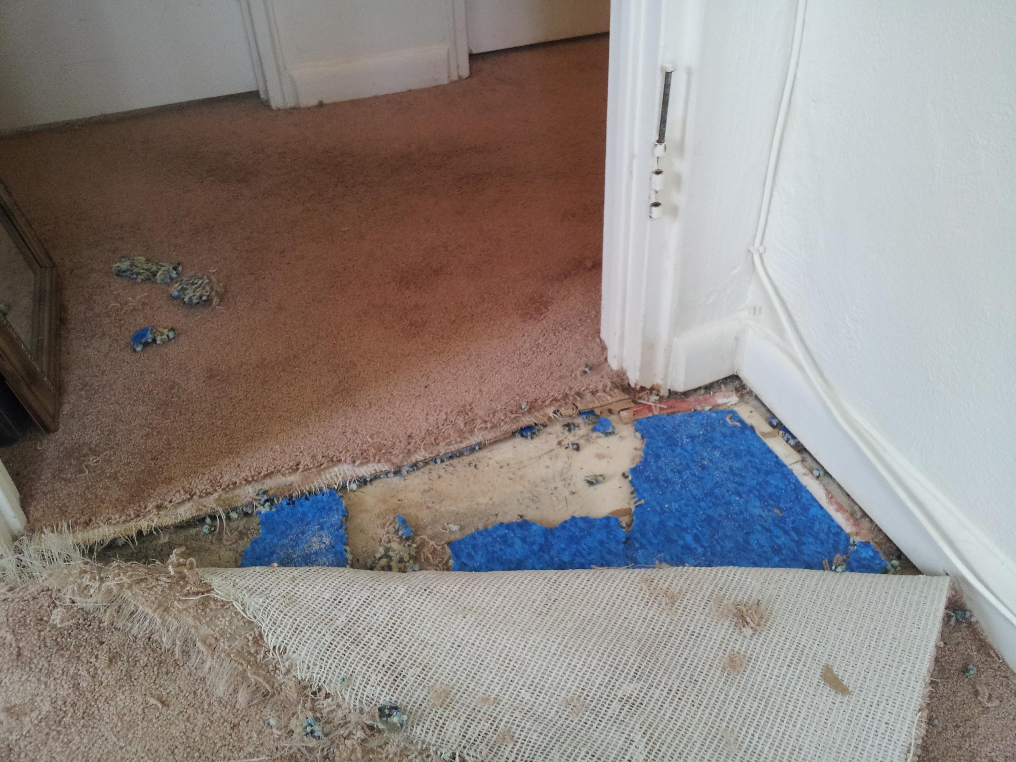 Cat Damage Repair Carpet Baltimore